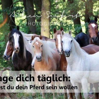 Fairein Pferdeerleben natürlich aktiv