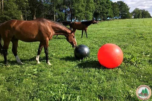 Fairein Pferde(er)leben natürlich aktiv