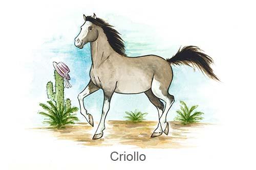Produkte für Criollos