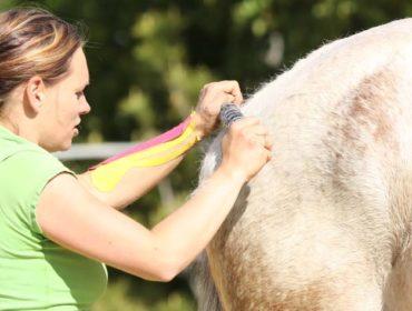 Tierphysiotherapie - Tierphysiotherapeut