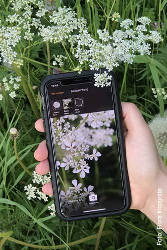Pflanzenbestimmung auf der Koppel mit Flora Incognita
