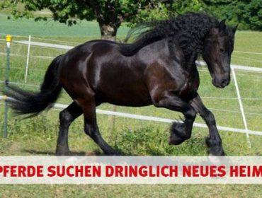 10 Pferde suchen bei Hamburg ein neues zu Hause.