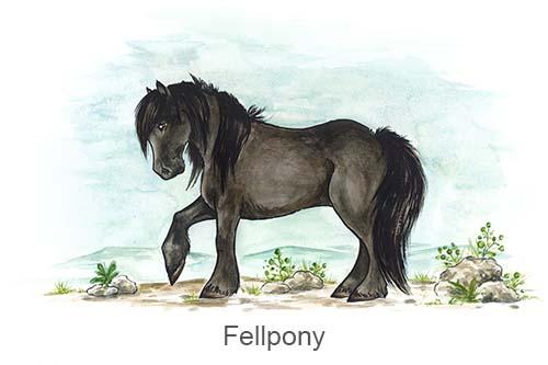 Produkte für Fellponys