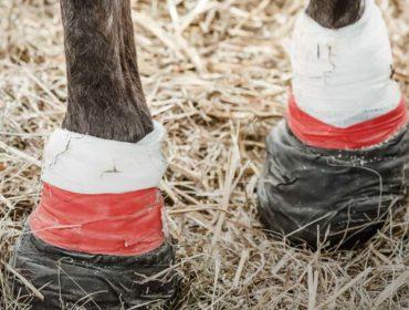Pferd misshandelt