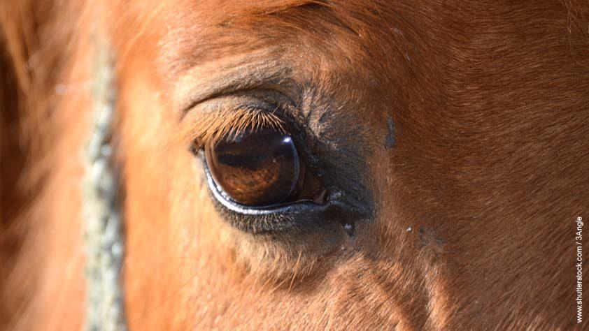 Das Borna-Virus ist seit März 2020 wieder bei der Tierseuchenkasse meldepflichtig.