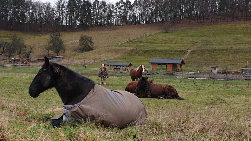 Orlatal Ranch