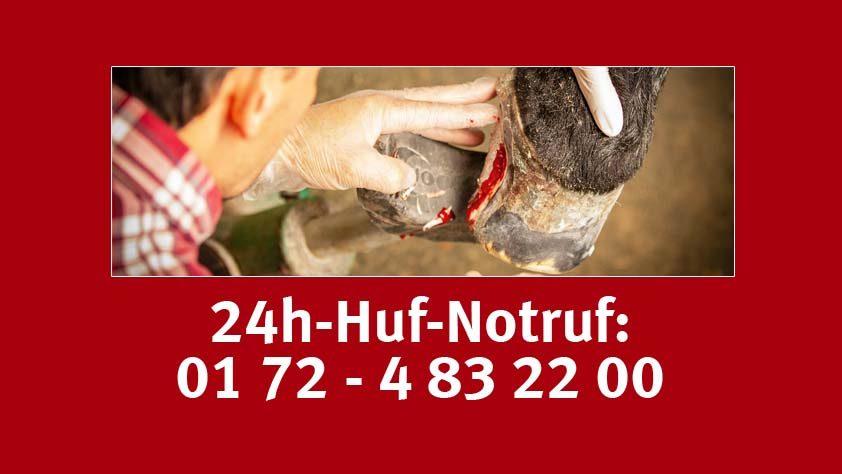 Hufnotruf - Martin Jansa