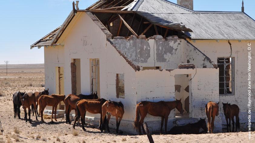 Namib - ein vom Aussterben bedrohtes namibisches Wüstenpferd