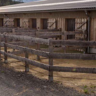 Silver Rock Ranch in Elterlein im Erzgebirge hat freie Pensionsplätze im Offenstall und auch freie Paddockboxen.