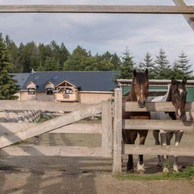 Silver Rock Ranch in Elterlein - Offenstall