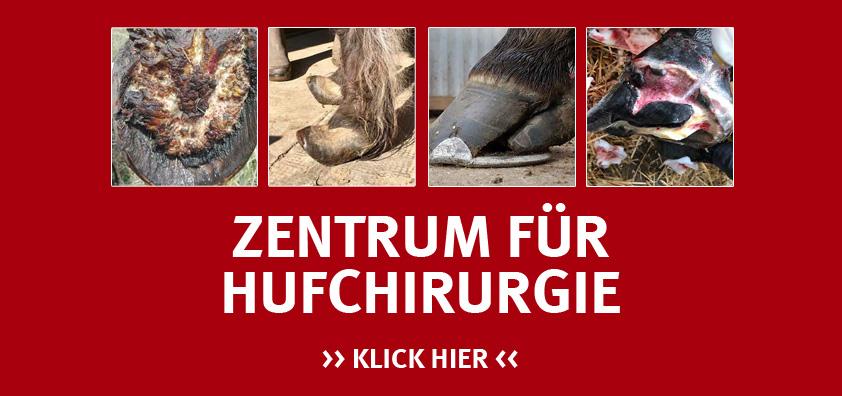 Martin Jansa im Zentrum für Hufchirurgie in Niedersachsen ist spezialisiert auf die Behandlung von Huferkrankungen wie Hufkrebs, Hufabszesse, Hornspalten u. v. m.