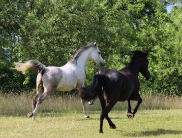 Horsemanship mit Christiane Göbel, Reiterhof am Waldrand