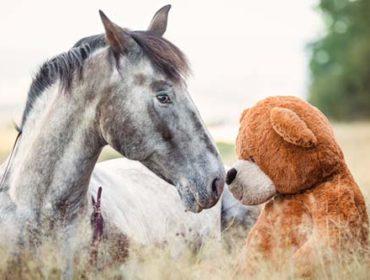 Kuriose Feiertage: Nimm deinen Teddybär mit in die Arbeit Tag