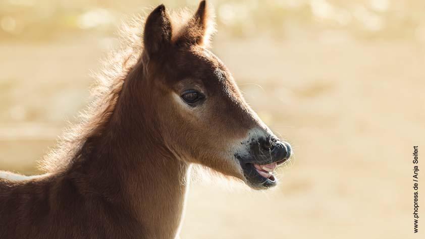 Wie Viele Pferdestärken Hat Ein Pferd