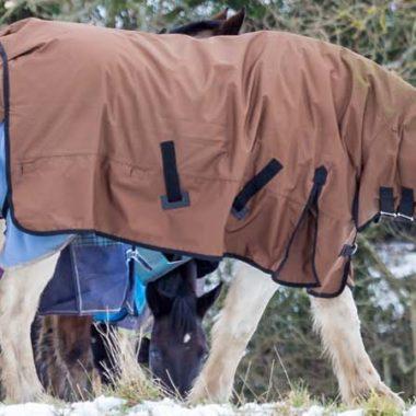 00024-was-ist-die-wohlfuehltemeratur-bei-pferden