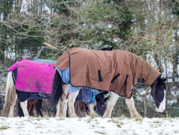Was ist die Wohlfühltemeratur bei Pferden