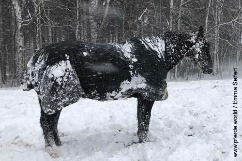 Thermoregulierung bei Pferden - Was ist die Wohlfühltemperatur bei Pferden?