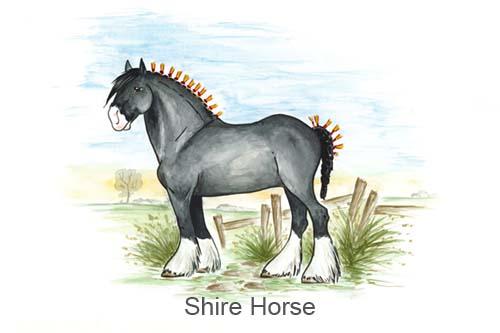 Produkte für Shire Horse