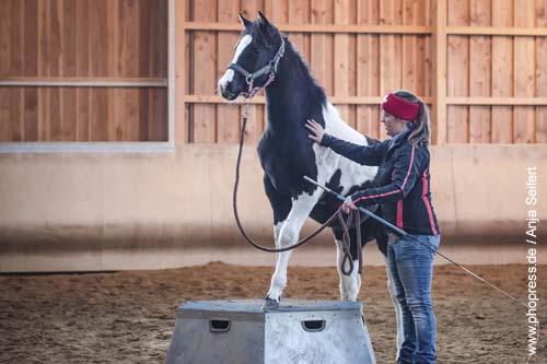 Fohlenspielplatz - auch kleine Fohlen wollen hoch hinaus auf dem Pferdepodest