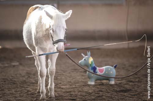 Fohlenspielplatz - apportieren ist eine leichte Übung für kleine Pferde