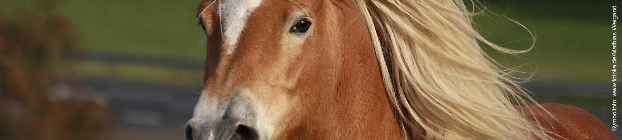Pferde und Stall vor Sturm sichern.