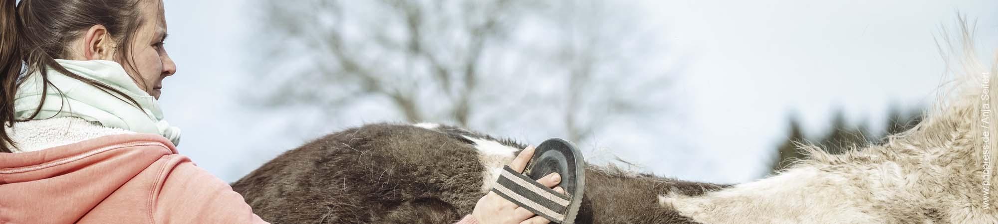 Fellwechsel-im-Fruehjahr-beim-Pferd