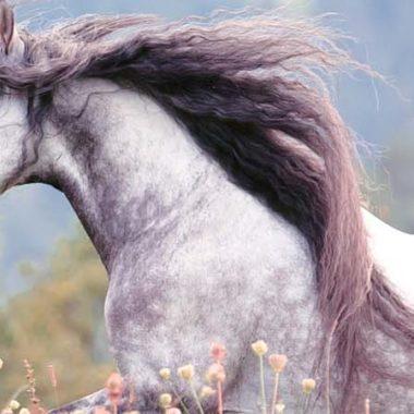 00036-lange-maehne-beim-pferd
