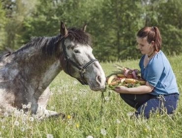 Ist mein Pferd zu dick? Übergewicht beim Pferd