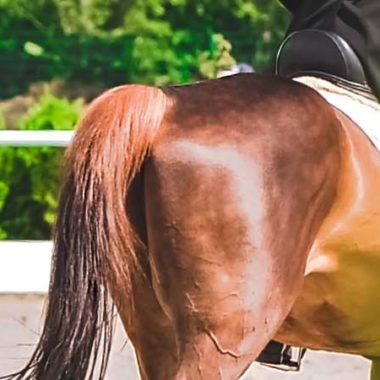 00040-wieviel-gewicht-darf-ein-pferd-tragen