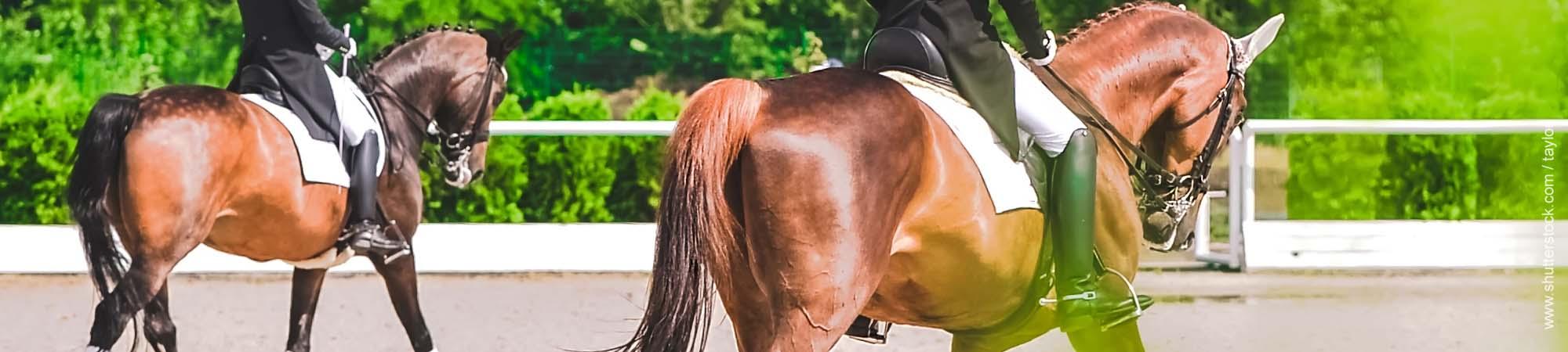Wieviel Gewicht darf ein Pferd tragen?