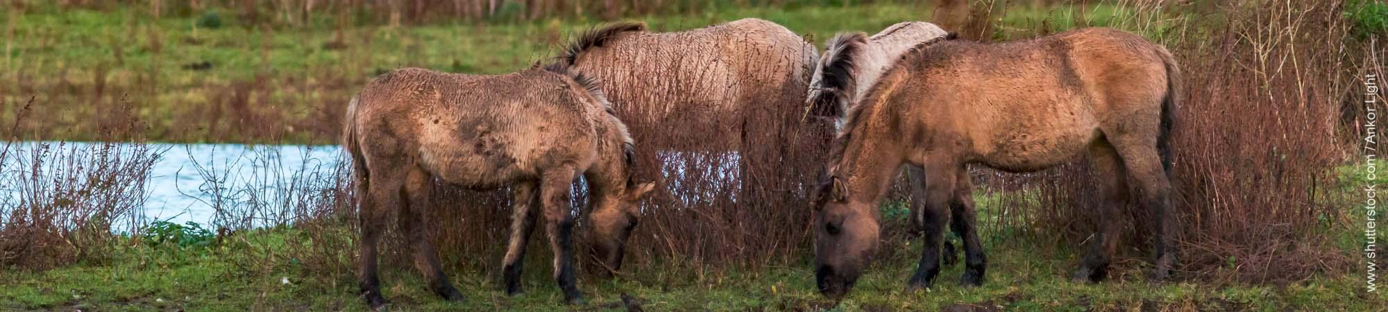 Die Launen der Pferde