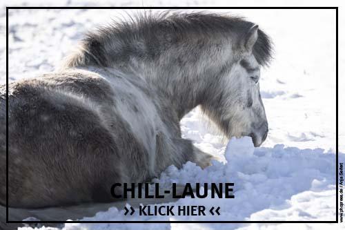 Die Chill-Laune bei Pferden