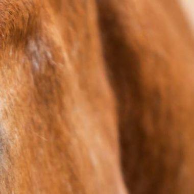 00055-kolik-beim-pferd-erkennen-und-behandeln