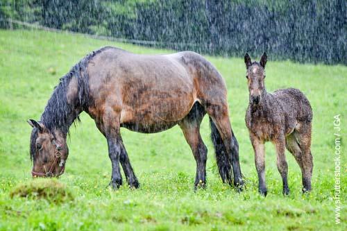 Die Schlecht-Wetter-Laune bei Pferden