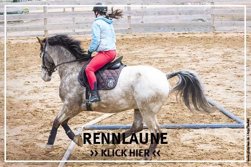 Die Rennlaune bei Pferden
