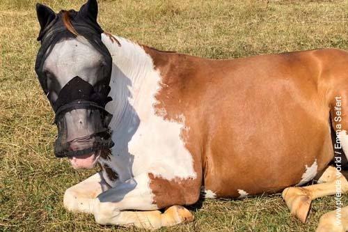 Sonnenbrand bei Pferden