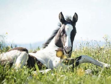 Pollenallergie beim Pferd