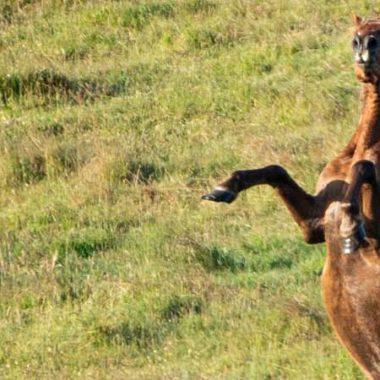 00054-pferde-in-der-pupertaet