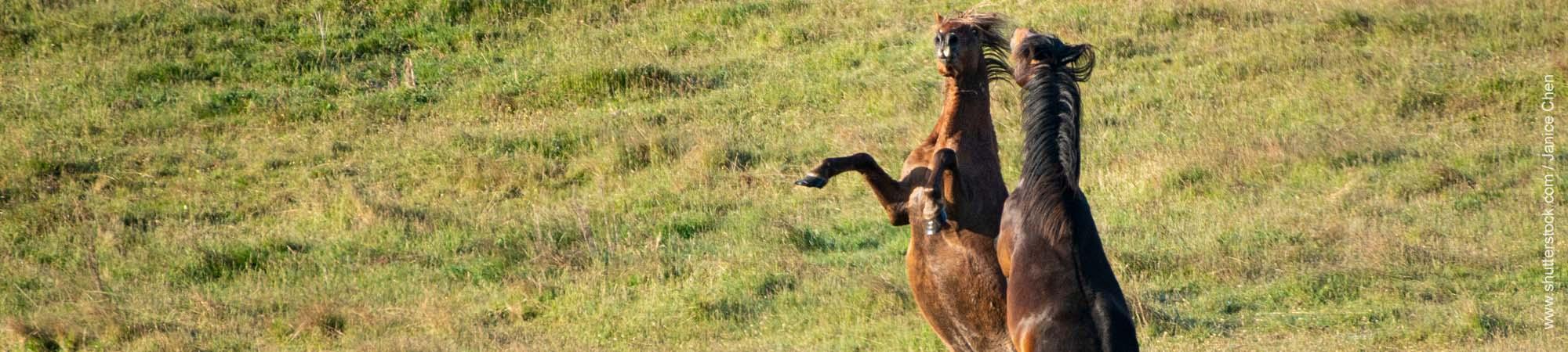 Pferde in der Pupertät