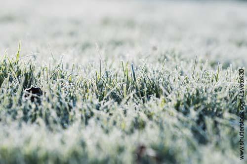 Gras bei frostigen Temperaturen enthält viel Fruktan.
