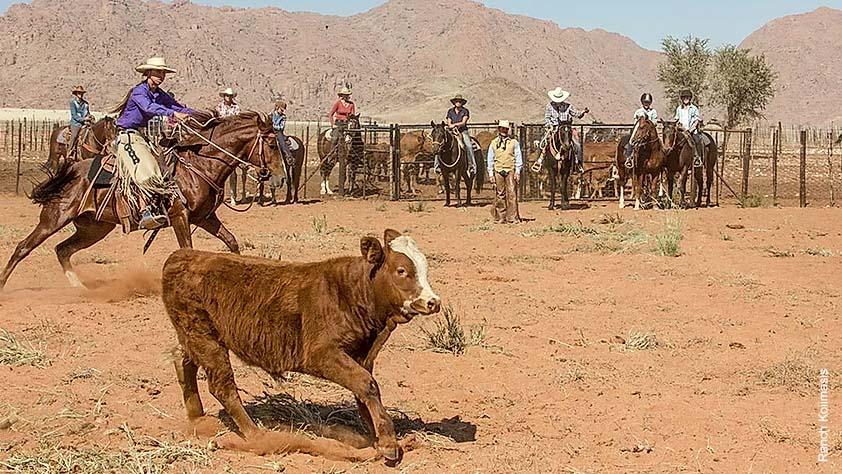 Roping auf einer Ranch mit Rindern