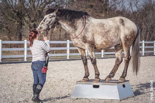 Pferdepodest gebraucht kaufen