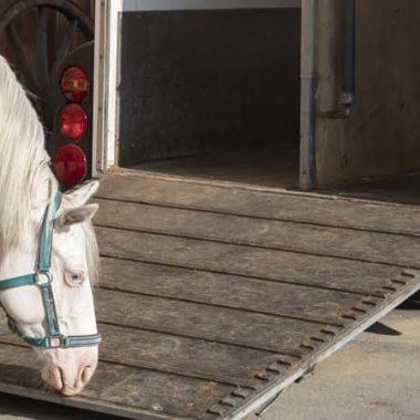 00060-haengertraining-mit-jungen-pferden