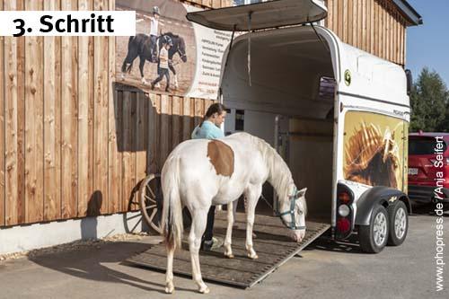 Hängertraining und Verladetraining mit einjähringen Pferden (Jährlingen)