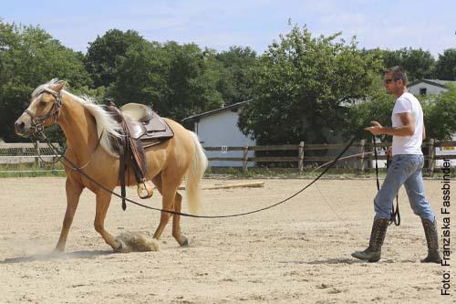 Jungpferdeausbildung Thomas Lik - Westernhorsetrainer Reining